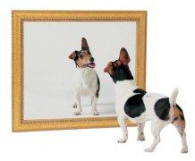 什么是镜像网站?网站被镜像了该怎么处理?